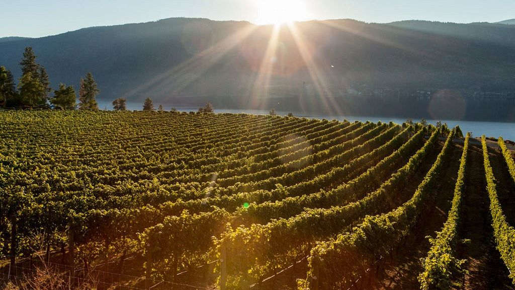 Scenic Sip: Ultimate Guide to Lake Country Wineries from Your Kelowna Hotel