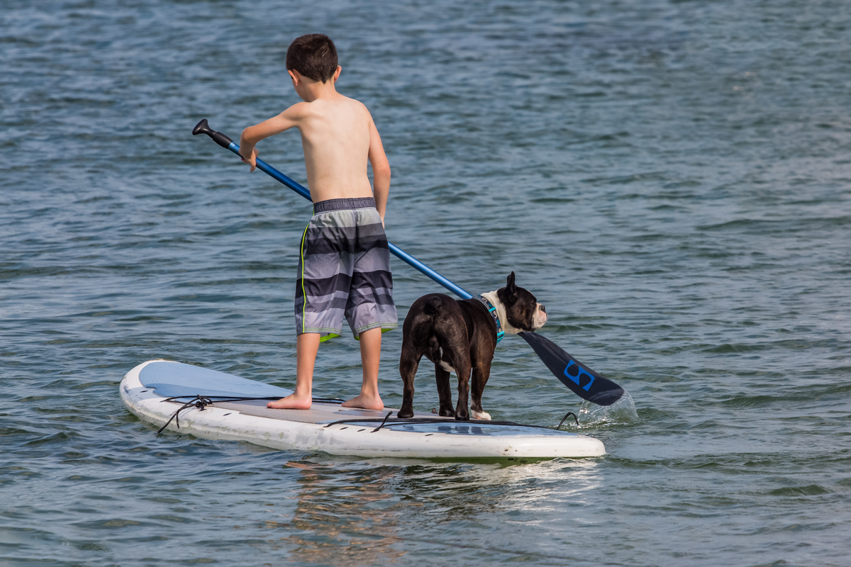 All your family members can enjoy a day out at the beach near pet friendly hotels in Kelowna.